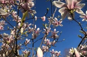With the Emergence of Spring, Change is Coming. How to Adapt?
